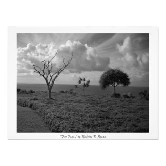 """Tree Trinity"" Black and White Professional Photograph"