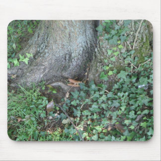 Tree trunk and ivy in forest mousepads