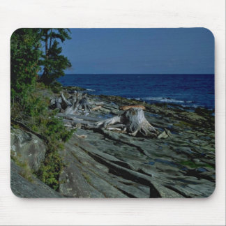 Tree Trunk At A Rocky Beach Mouse Pads