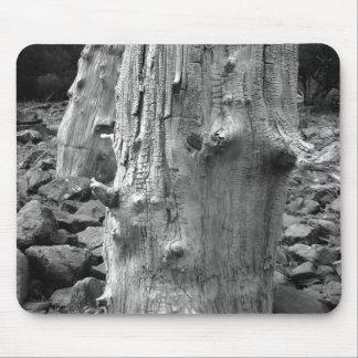 tree trunk bk mouse pad