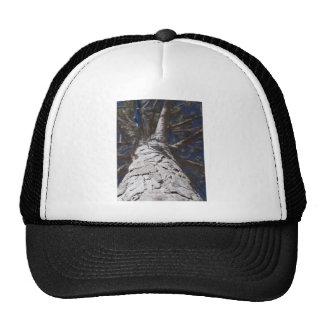 Tree trunk cap