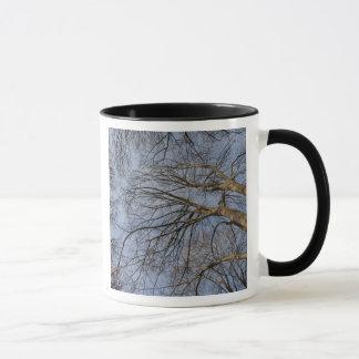 Tree trunk design/pattern. Pioineer Park, WA Mug