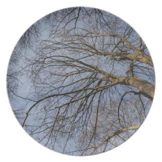 Tree trunk design/pattern. Pioineer Park, WA Plate