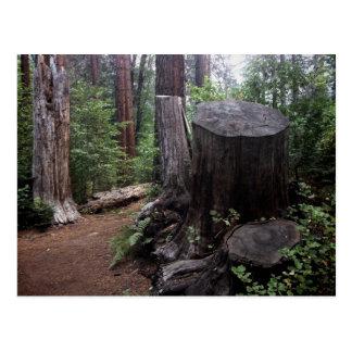 Tree Trunk Post Card
