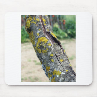 Tree trunk with yellow moss fungus mouse pad