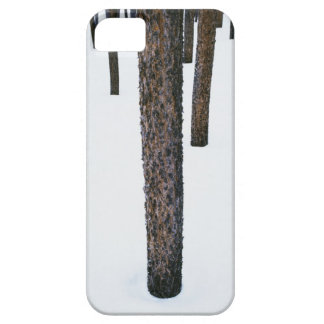 Tree Trunks in Snow Barely There iPhone 5 Case