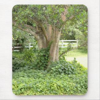 Tree trunks leaves plants Mousepad