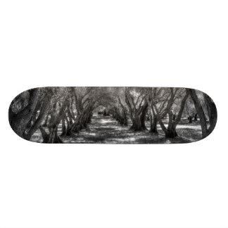 Tree Tunnel 21.6 Cm Skateboard Deck