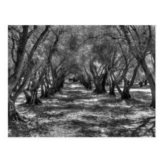 Tree Tunnel Postcard