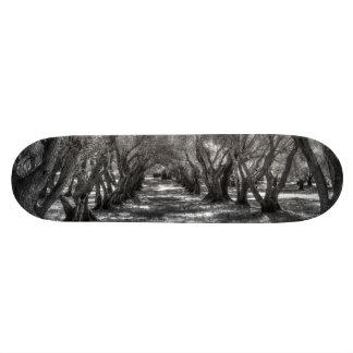 Tree Tunnel Skateboard Deck