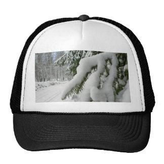 Tree under snow cap