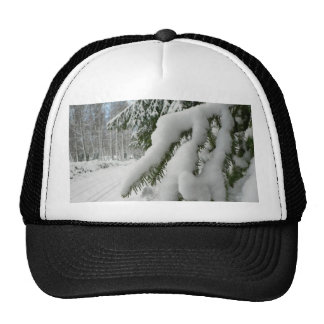 Tree under snow hats