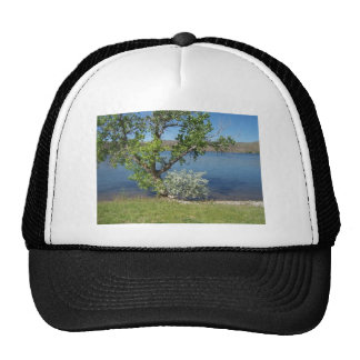Tree with Bush on Lake Cap