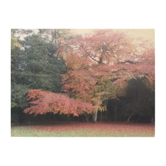 Tree with pink leaves pretty garden art wood canvas