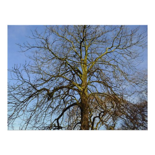 Tree Without Leaves Photo Print