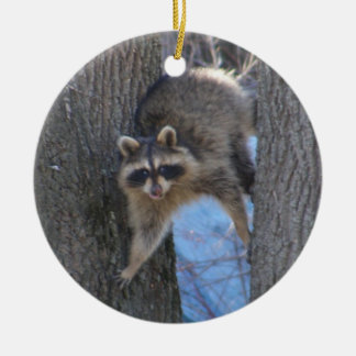 Treed Coon ~ ornaments