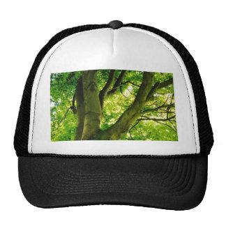 Treee Cap