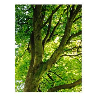 Treee Postcard