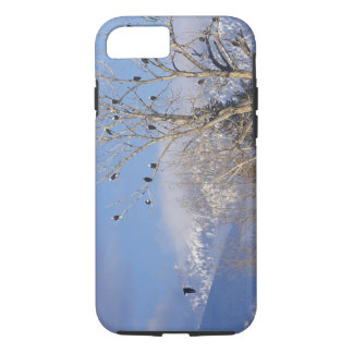 Treeful of bald eagles near Hamilton Montana iPhone 8/7 Case