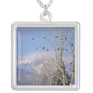 Treeful of bald eagles near Hamilton Montana Silver Plated Necklace