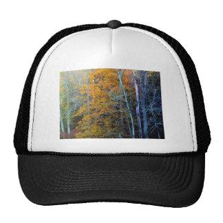 TREELINE IN AUTUMN CAP
