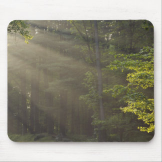Trees alongside 7 Lakes Drive, Harriman, NY Mouse Pad