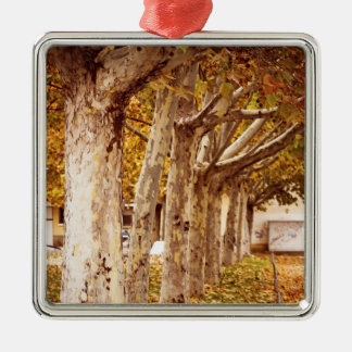 Trees and leaves in urban park in autumn Silver-Colored square decoration