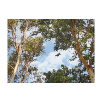 Trees and Sky Stretched Canvas Print