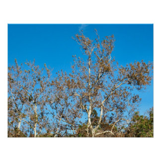 trees and sky print