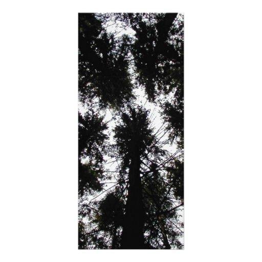 Trees at Highland Forest Park, New York Custom Rack Cards