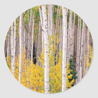 Trees Autumn Aspens Colorado Classic Round Sticker