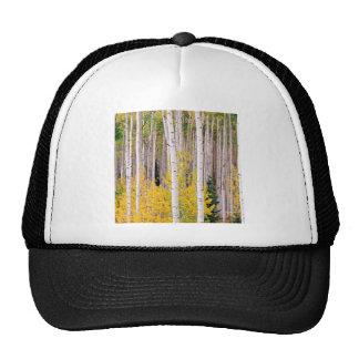 Trees Autumn Aspens Colorado Hat