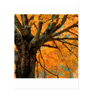 Trees Autumn Maple Bass Lake Post Cards