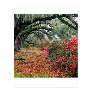 Trees Azaleas Oaks Magnolia Charleston Postcard