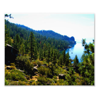 Trees By The Water Photo Print
