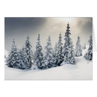 Trees Covered With Hoarfrost And Snow Card