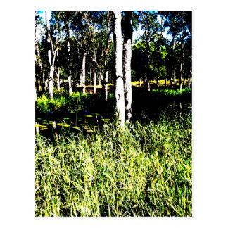 TREES & DAM ABSTRACT PHOTO QUEENSLAND AUSTRALIA POSTCARD