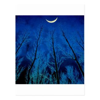 Trees Eerie Silence Postcard