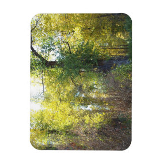 Trees, forest with sunlight rectangular photo magnet
