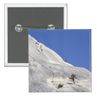 Trees growing in hostile granite environment 15 cm square badge