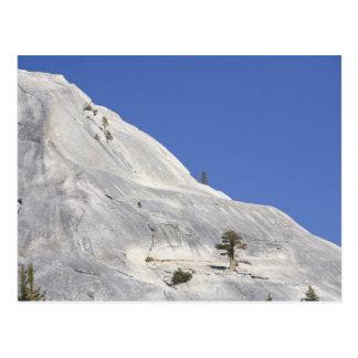 Trees growing in hostile granite environment postcard