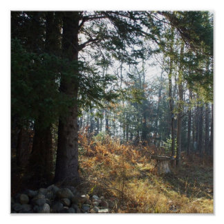 Trees in an Early Autumn Morning. Poster