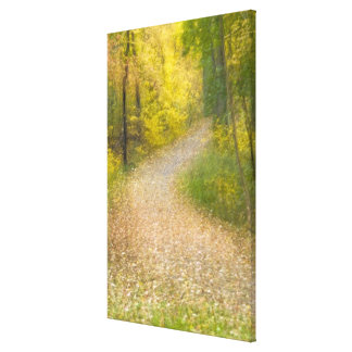 Trees in Autumn Colors and Leaf-Covered Pathway Canvas Print
