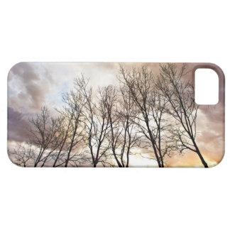 Trees in Autumn iPhone 5 Cases