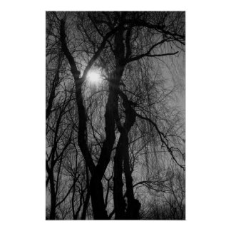 Trees in Silhouette Sun Rays Black and White Poster