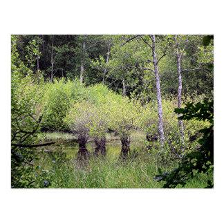 Trees in swamp on El Camino, Spain Postcard