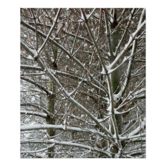 Trees in the Snow Winter Photo Poster