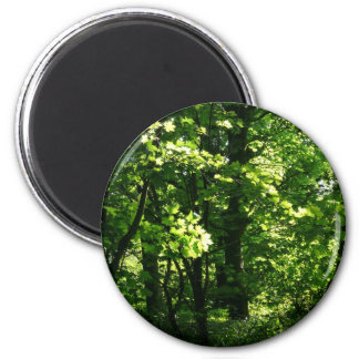 Trees in the Spring. Bute Park, Cardiff. Wales 6 Cm Round Magnet