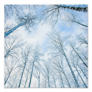 trees in the winter and the sky posters