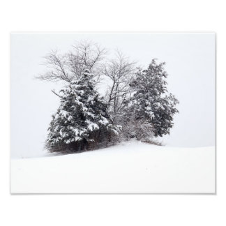 Trees In Winter Photograph
